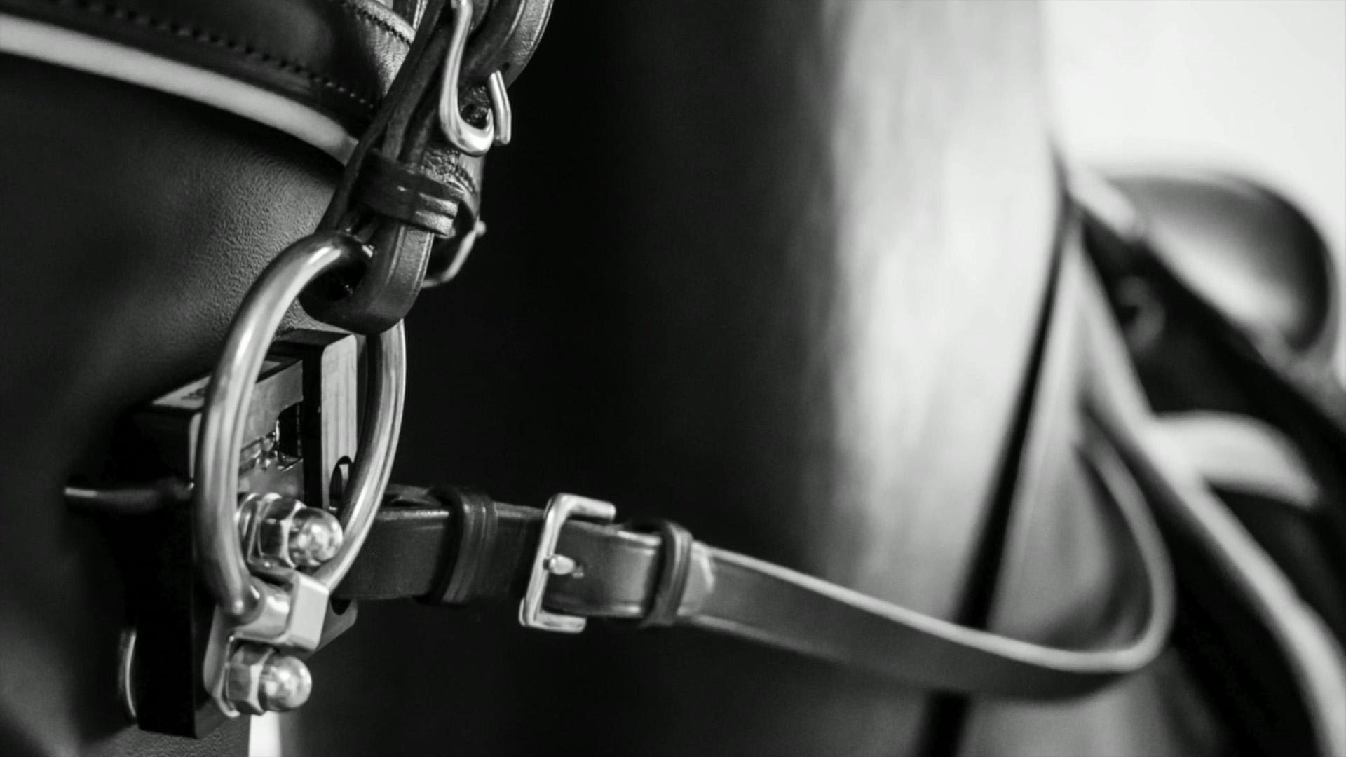 """Ein """"digitales Traumpferd"""" – ab Sommer 2019 in Walldorf, hier im Video"""